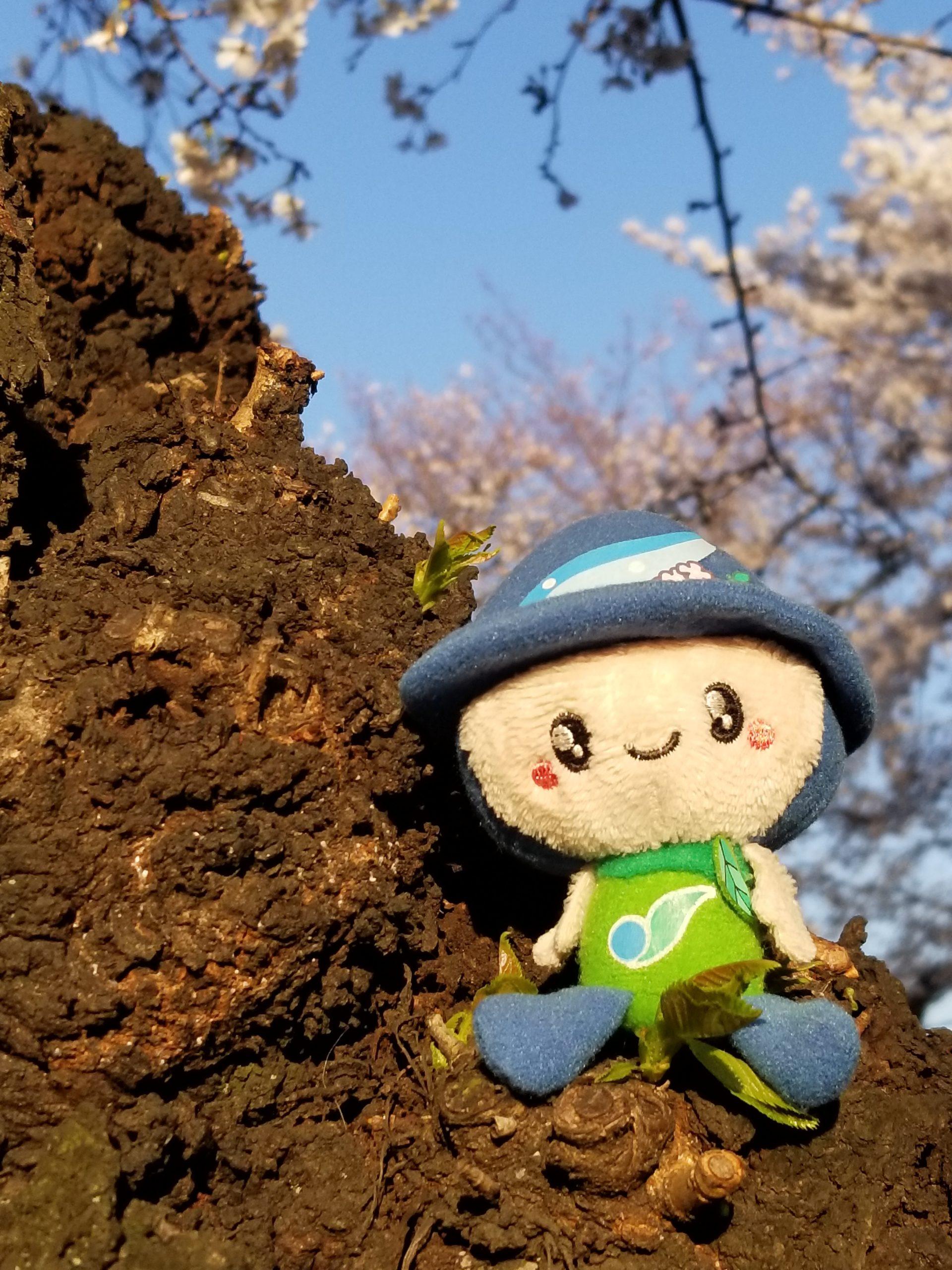 桜とさがみんの投稿写真