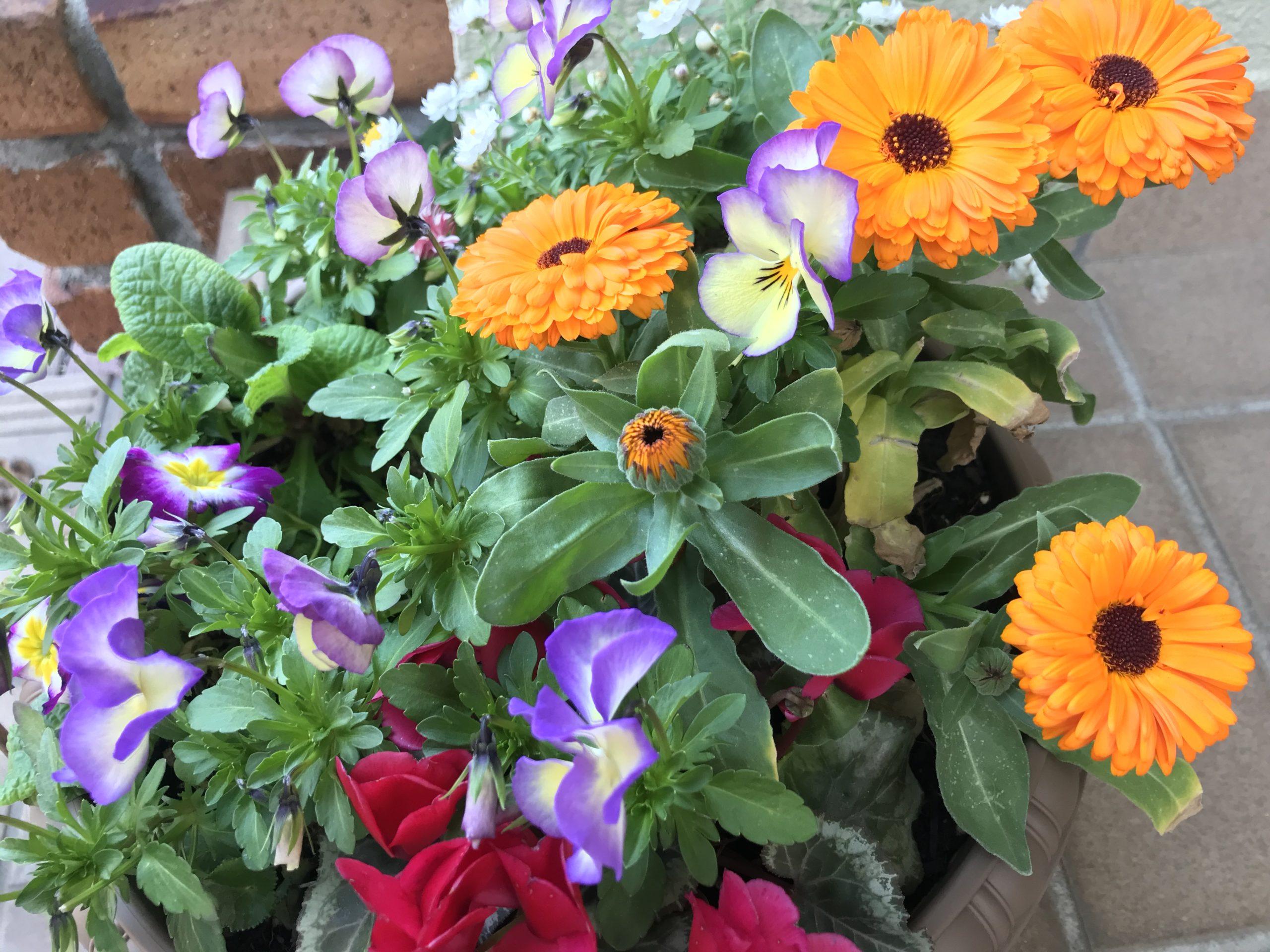 花々の投稿写真