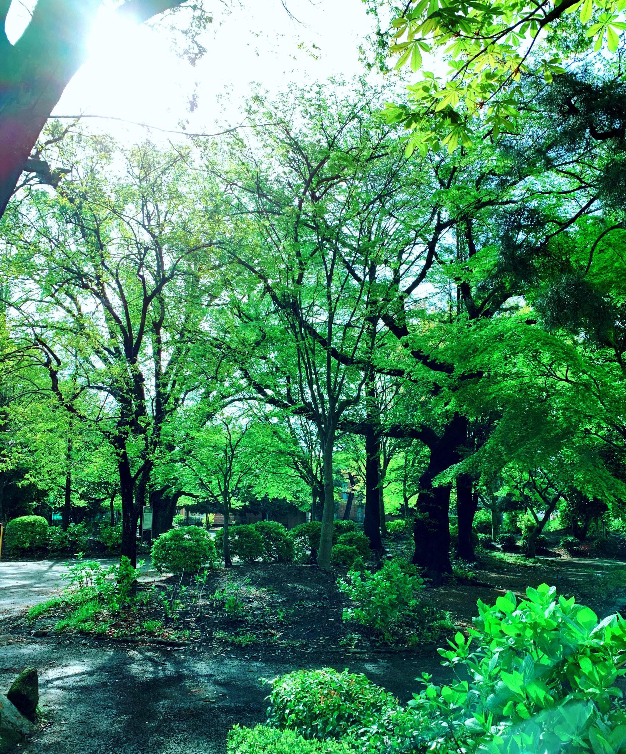 朝から新緑を楽しみました!の投稿写真