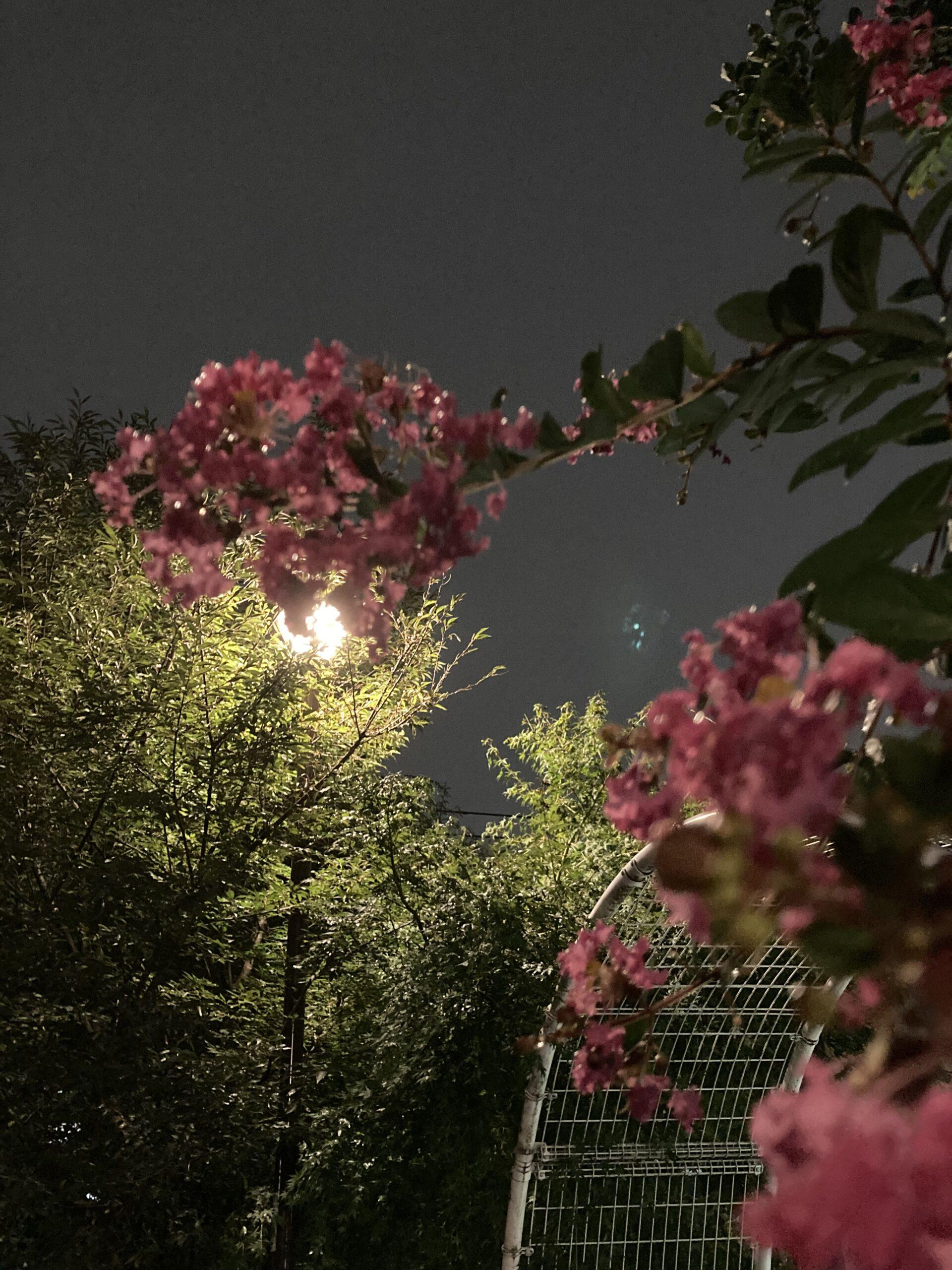 夜桜ならぬ…の投稿写真